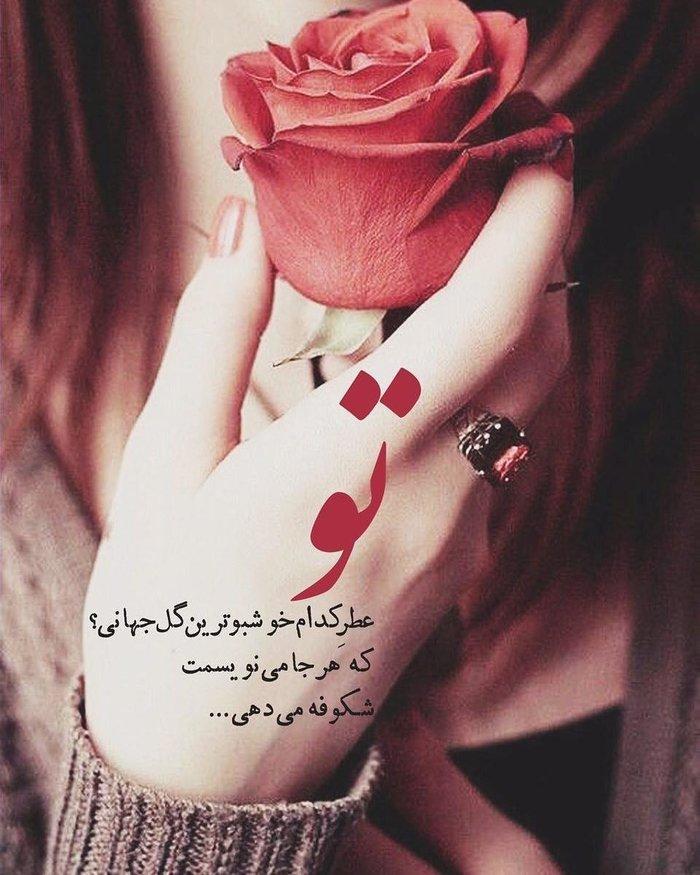 خوشبو ترین گل جهان فاطمه123