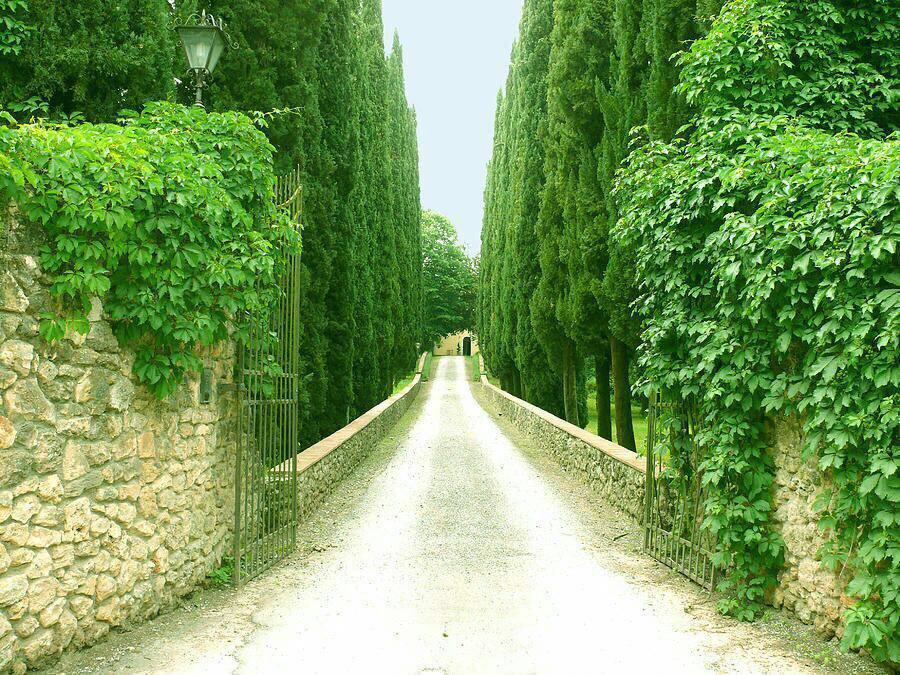 زندگي ڪوچۂ سبزیست  میانِ دل و دشت  ڪه در آن   عشق مهم است و گذشت   زندگي مزرعۂ خوبي هاست   زندگي راہِ رسیدن   به خـ♡ـداست  سلام  صبحتون زیبا **پسرکوهستان**