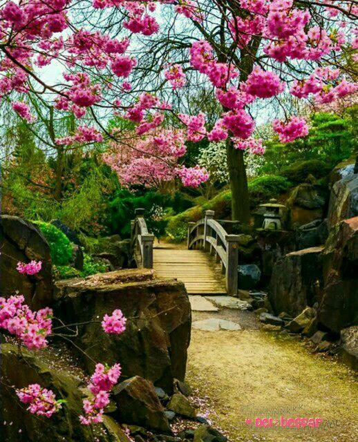 سلام  صبح دوشنبه تون بخیر امروزتون  به قشنگی بهشت به زیبایی گلها به شـادی پروانـه ها  به خوش خبری قاصدکها و به محکمی  پیوند قلب هـا که یاد آور **پسرکوهستان**