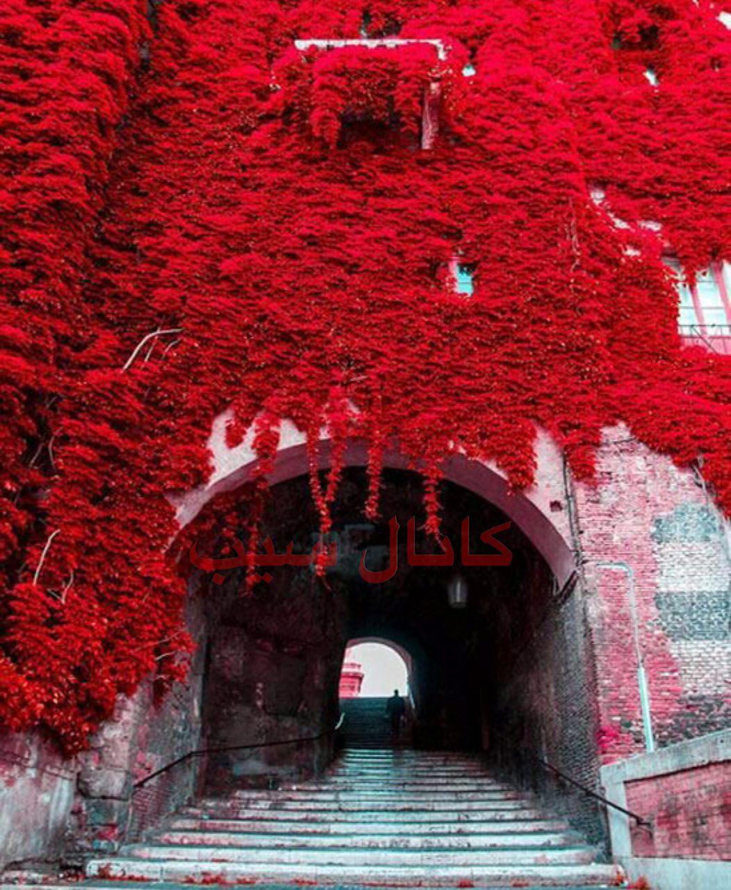 گلهای تزیینی حسن1344