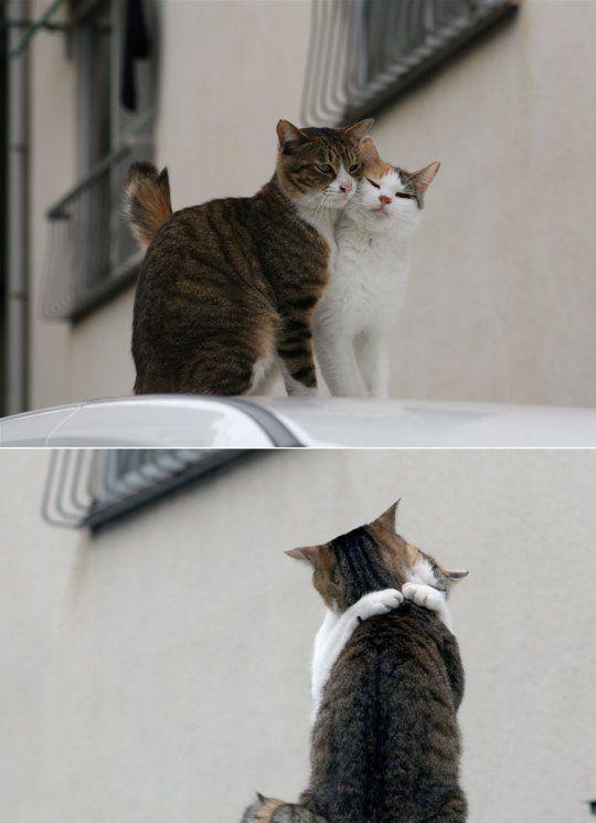 عشقولانه های گربه ای desperado