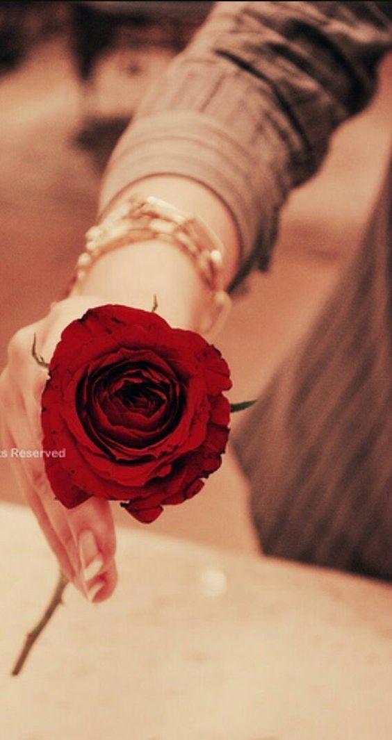 گل سرخ آلشیا