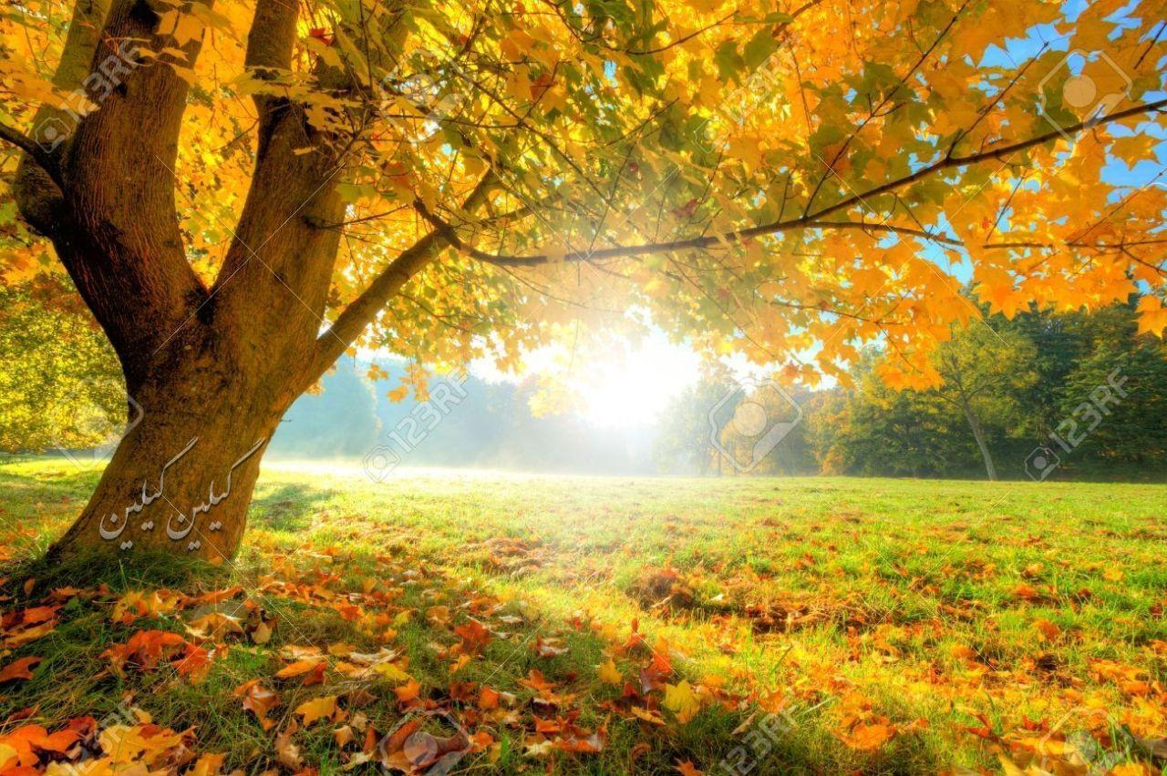 پاییز  عزیز دُردانهی فصل هاست سوگُلی دل های عاشق فصل باران های زود به زود بوسه های خیس و چترهایی که عشق را خوب می فهمند  صبح بخیر **محسن**