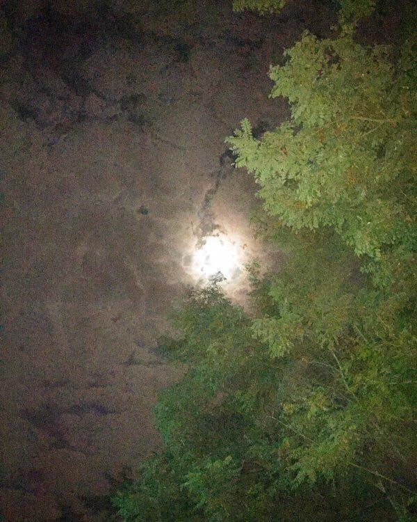 شکار ماه elena7