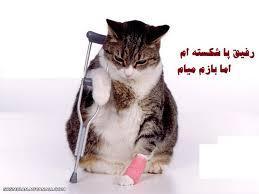 260685 سپیده سادات شاد