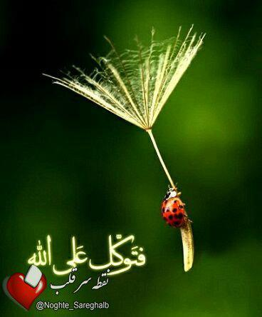 176124 محمد متين