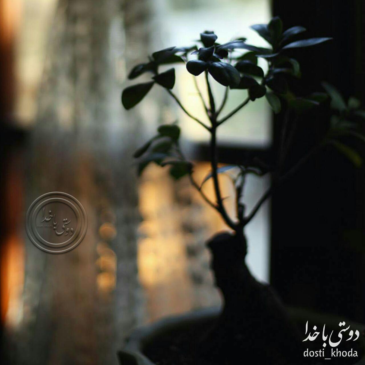 175381 محمد متين