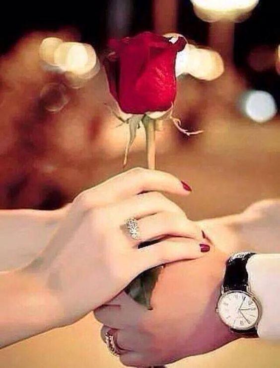 گل سرخ شیانا