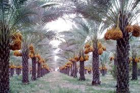 228558 ساناز بوشهر
