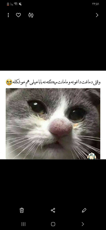 266129 سمن بوشهر