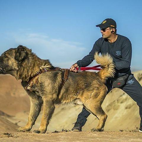 سگ وحشی alireza sayeh